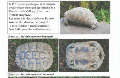 IDENTIFICATION de TORTUES TERRESTRES méditerranéennes