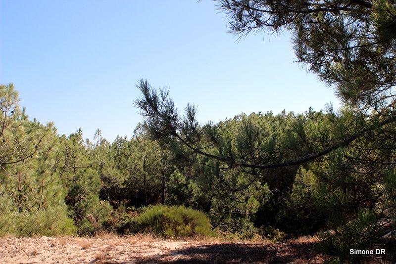 Forêt, ma belle forêt !