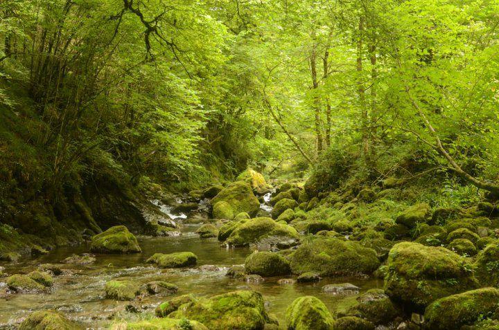 Hêtraie de la forêt d'Issaux, dans le Béarn (Pyrénées-Atlantiques).