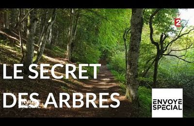 Le monde secret des arbres