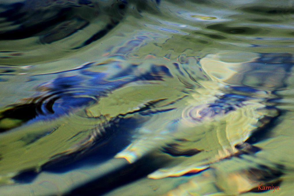 un moment de grâce : alliance de la lumière de l'eau et du mouvement