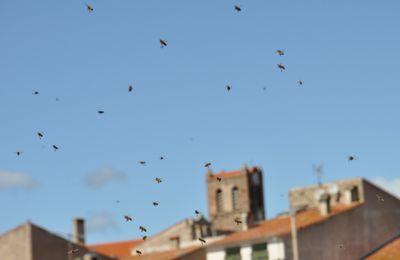 Sur le toit de la menuiserie des abeilles