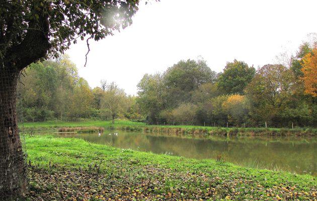 les étangs de Javage