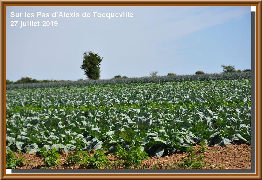 Escapade en Val de Saire : Tocqueville