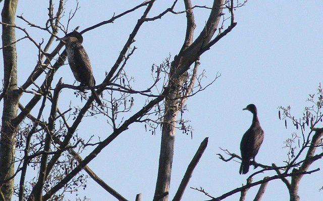 Album - oiseaux-palmipèdes
