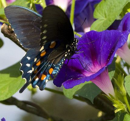 Butterfly on Morning