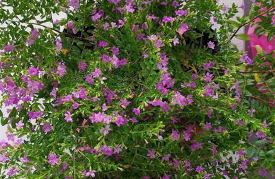 Never miss to plant this year-round blooming flowers in your garden