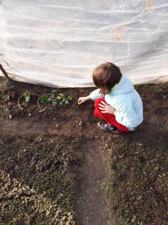 MST: l'environnement - école primaire Vicomoscano