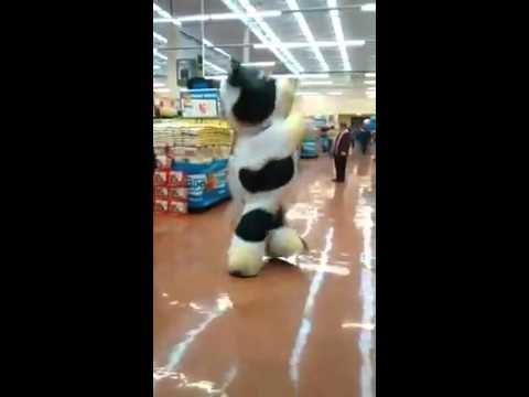Une mascotte qui adore son boulot