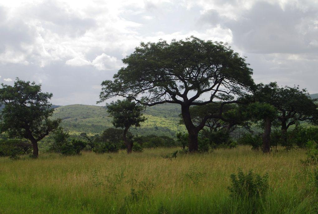 Album - Hluhluwe-iMfolozi & iSimangaliso Reserves