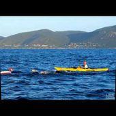 Ehandicap World Records - Exploit Réalisé : Traversée à la nage en monopalme entre Ajaccio et Propriano