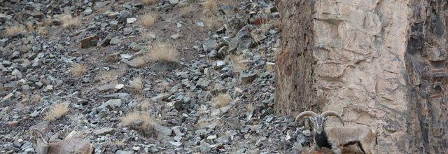 Où se cache le léopard sur cette photo ?