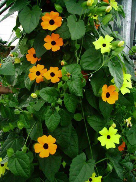 """<p align=""""justify""""><font face=""""Verdana""""><font color=""""#0000ff""""><strong><font size=""""2"""">Si vous pr&eacute;f&eacute;rez voir des fleurs plut&ocirc;t que des immeubles, soyez logiques jusqu'au bout et venez acheter vos chrysanth&egrave;mes chez les horticulteurs des Va&icirc;tes ! </font></strong></font></font></p> <strong><font face=""""Verdana"""" color=""""#0000ff"""" size=""""2""""> <p align=""""justify""""><font face=""""Verdana""""><font color=""""#0000ff"""" size=""""2"""">Merci de votre soutien, ils appr&eacute;cieront et vous sere"""