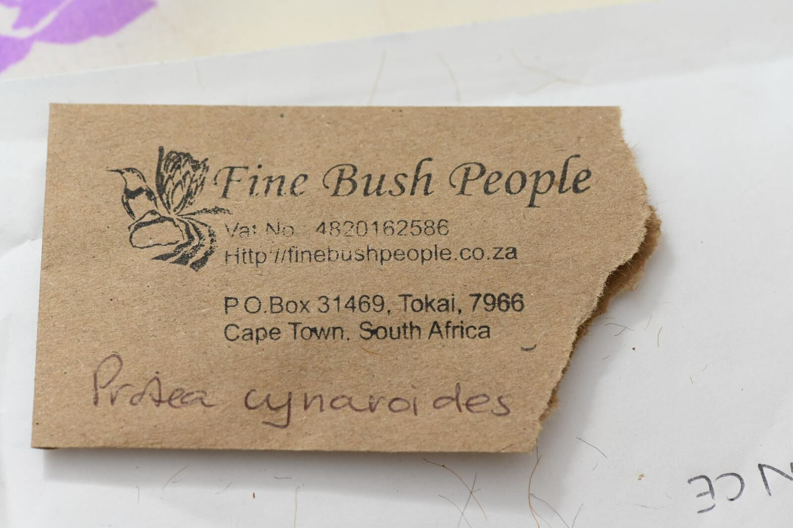 Semis de Protea ...