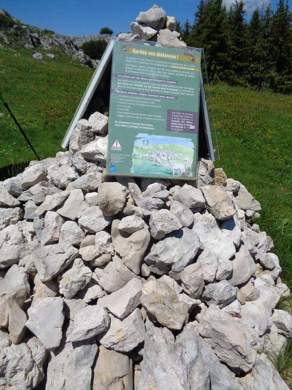 Crêtes de la Gagère - Fond d'Urle/col de lachau 26 avec le Club pédestre Chabeuillois (CPC)
