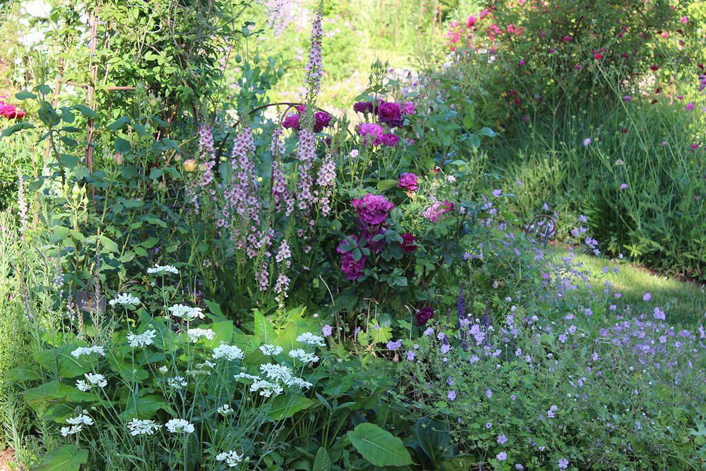 Juin: un mois riche en rencontre dans mon jardin