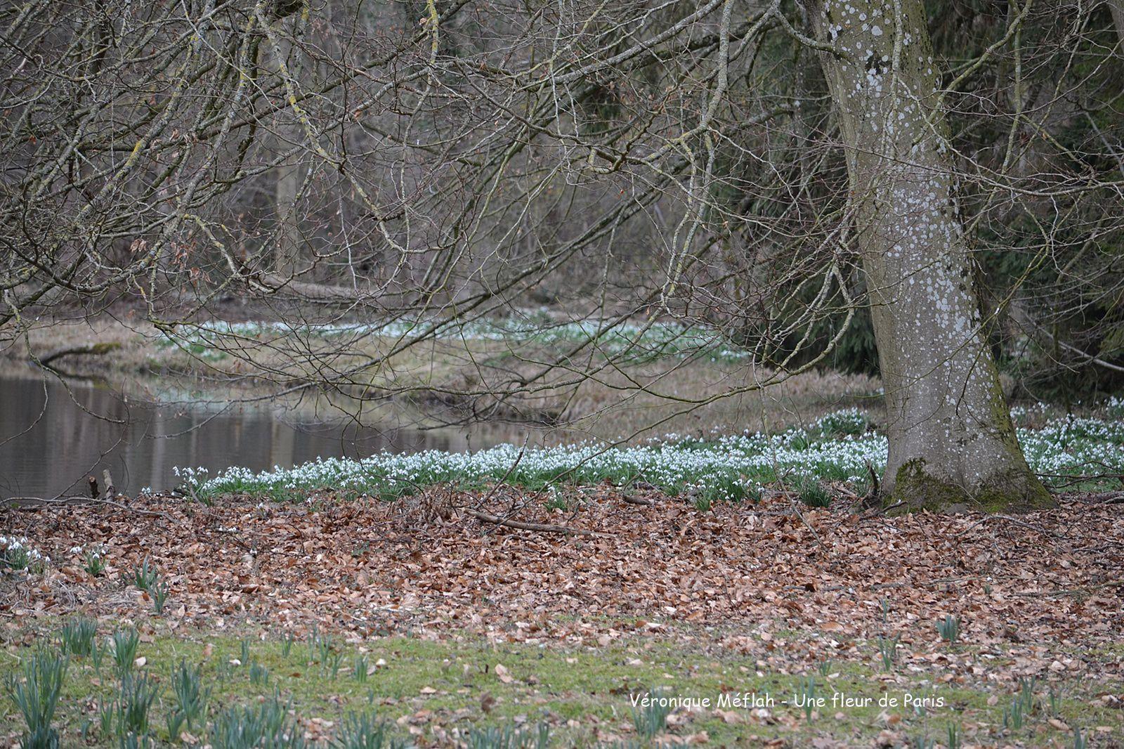 Rambouillet : Un air de printemps