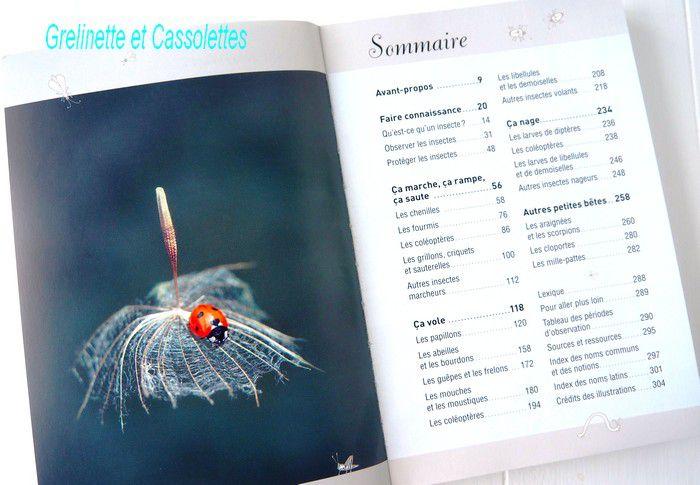 A la découverte des Insectes, Coccinelles, Papillons, Scarabées...