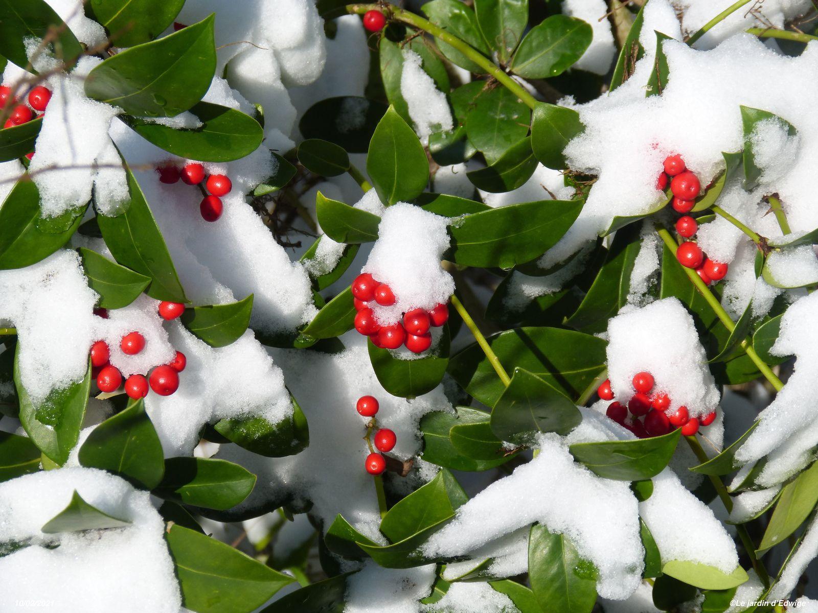 Beauté d'hiver au jardin.