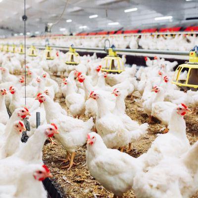 COVID-19 Impact on Animal Feed Market 2020
