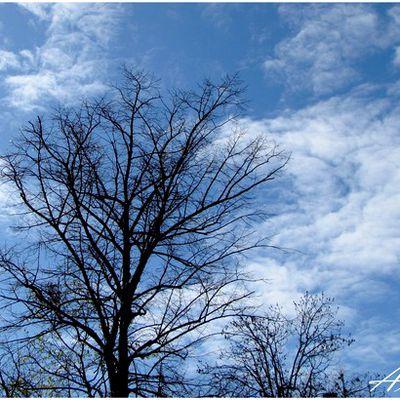 Parc de Beauregard: arbres et ruine
