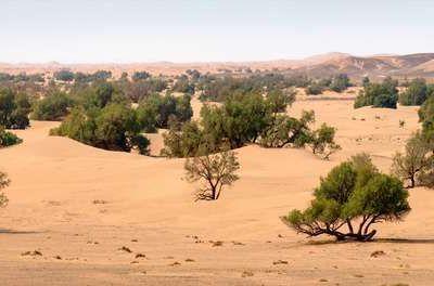 Des millions d'arbres découverts dans le désert du Sahara