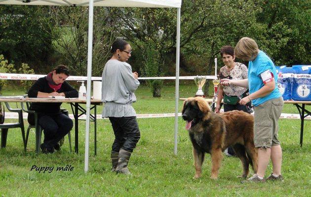 Regionale d'élevage Leonbergs Suarce 2011