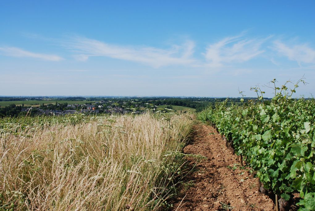 Balade ligérienne, acte I : Richard Leroy à Rablay-sur-Layon