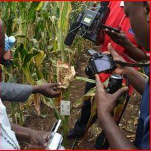 Un journaliste ougandais: comment écrivez-vous sur la biotechnologie végétale lorsque les opposants répandent la désinformation?