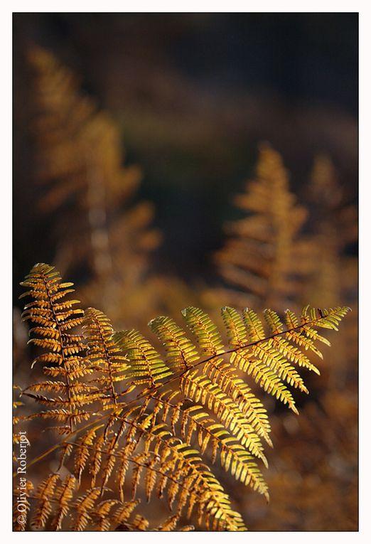 Album - Photos d'automne
