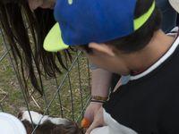 La ferme aux autruches (22/07/2014)