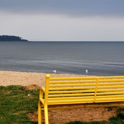 Bench on the shore