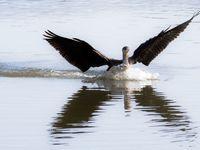 Les Baux de Provence - Amerrissage d'un cormoran - Sourire du Vietnam - de Jean-Claude