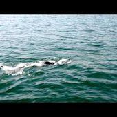 Thierry Corbalan traverse le Lac Léman pour l'association SEPas Impossible
