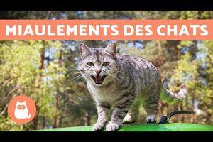 """Miaulements (variés) des chats + histoire du chat porte-bonheur nippon (le """"Maneki neko"""") & chant de tourterelles+ 1 blog écrit par Jules la tourterelle..."""