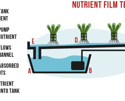 Hydroponics All You Need to Know