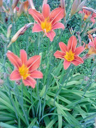 Ces quelques fleurs...