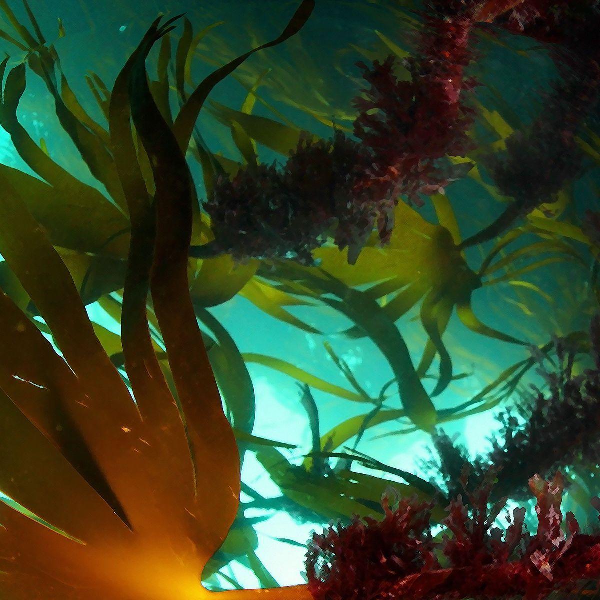 Abondantes dans les milieux aquatiques (mers et eaux douces), elles peuvent vivre dans des conditions écologiques très diverses: sols humides, neige, etc. Mais pour la majorité, elles se trouvent en milieu marin.