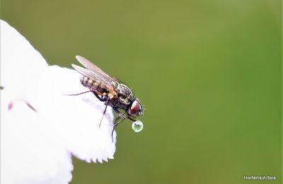 La canicule, le 'sale temps pour les mouches' et..... (photos le 15 août 2020)