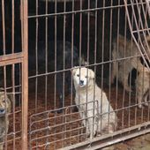 Horrific pictures emerge of the 'nightmare' conditions at the Yulin Dog Meat Festival