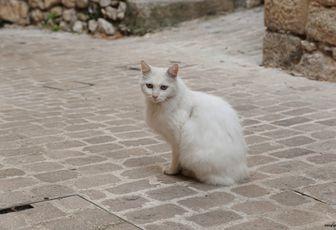 Scène de rue - Le chat blanc
