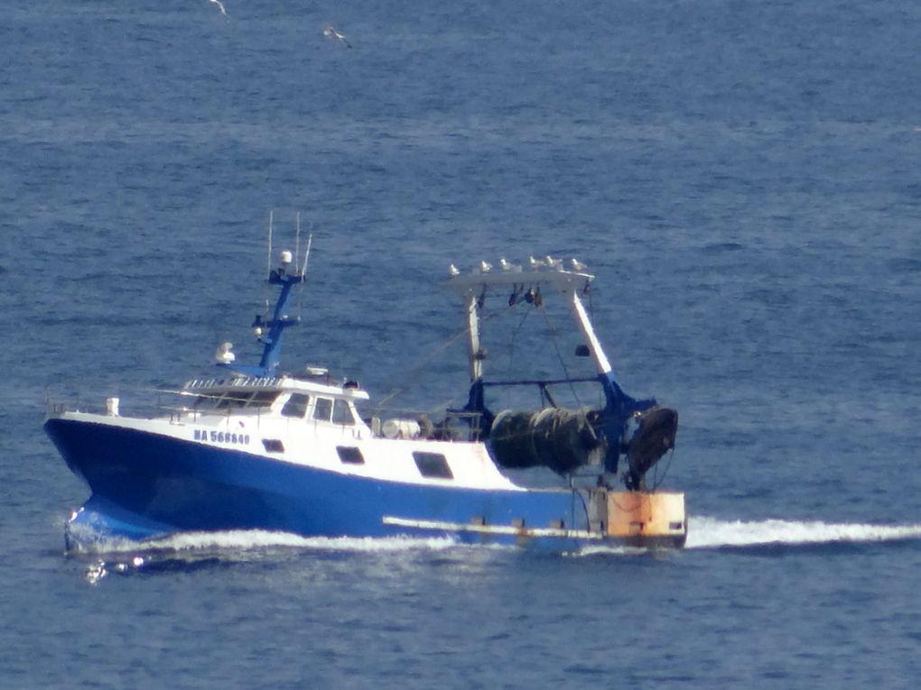 JOSEPH DI TRENTO  MA568849 , rentrant ao port de peche de Saumati (Marseille) le 19 juin 2018