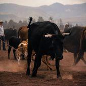 L'Union Européenne impose l'importation de 35 000 tonnes de bœuf américain ! - INITIATIVE COMMUNISTE