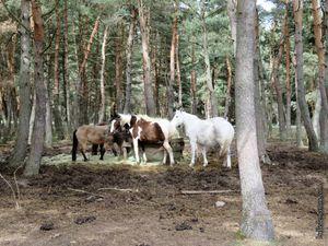 Quelques chevaux du centre équestre