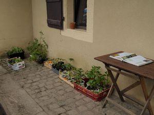 """La donnerie """"spéciale jardin"""" et la grainothèque : de quoi se procurer des graines et des plants de qualité sans dépenser un sou."""