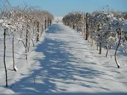 Viticulture dans le Dakota du Sud