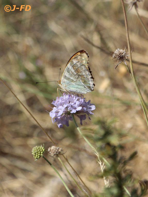 Album - Papillons d'Italie 2