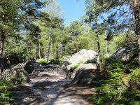 Dernière sortie : les 25 bosses à Fontainebleau