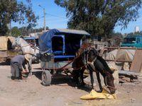 le marché d'Had Draa