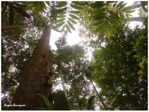 COP21... Retour en Amazonie